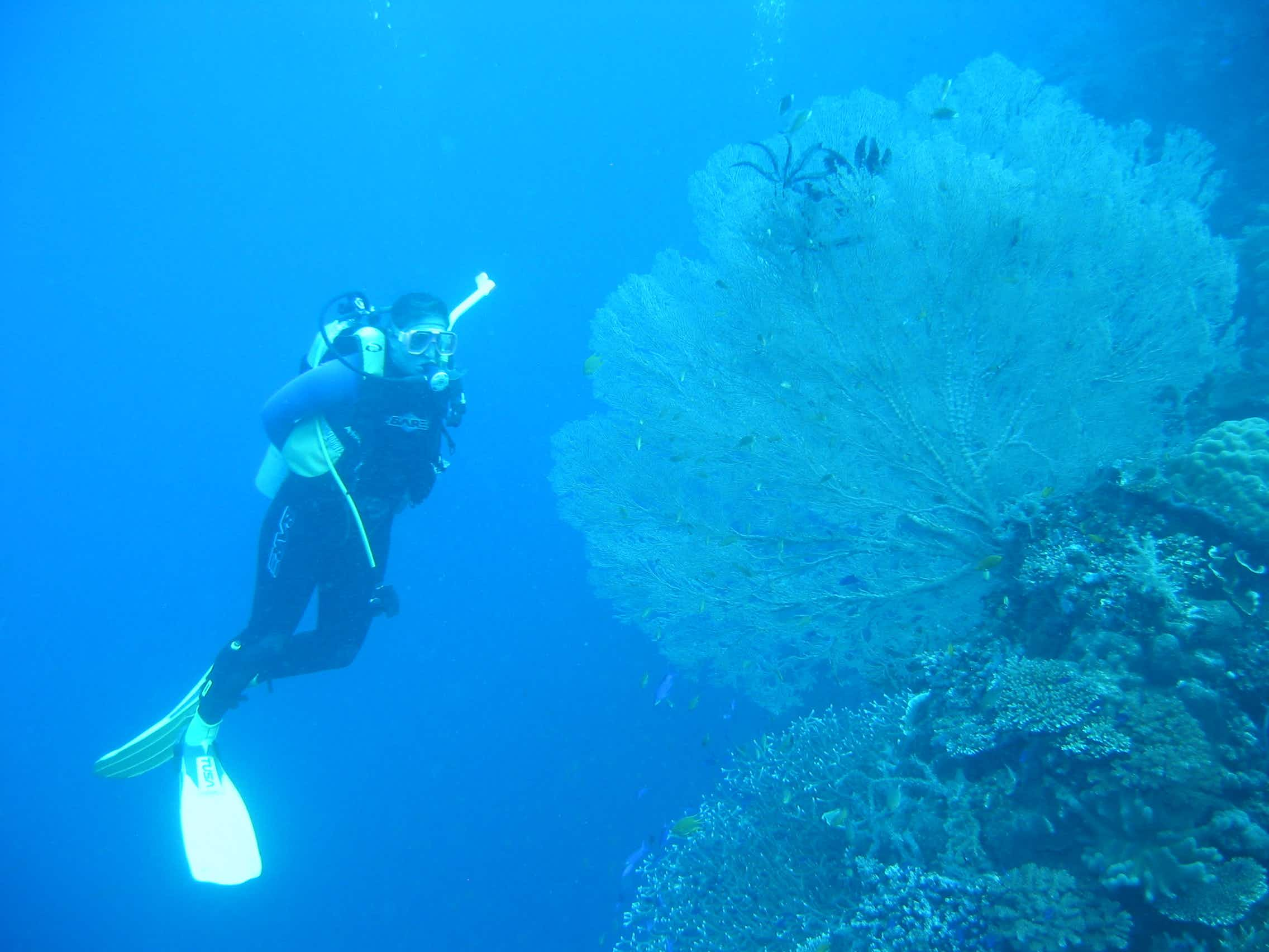 Dr. Vincent dives in damaged habitats to figure out what to do for species and spaces that are at risk.