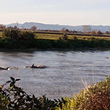Dolphins spotted on the Piako River on NZ's North Island © Kristy McPherson