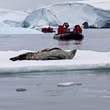 Leopard seal on ice flow Crystal Sound Antarctic Pennisula.