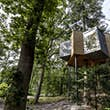 The tree house at Lovtag has the trunk right through the center © Lovtag Treetop Hotel / Søren Larsen