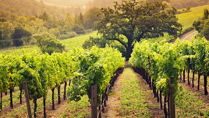 As Napa Valley reopens, wine tasting has a new set of rules
