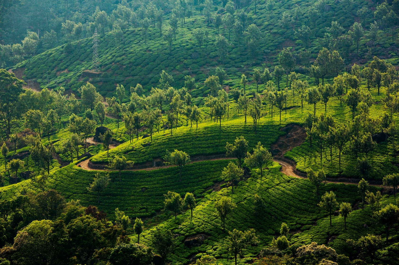 Discover the tranquil hills of Kerala's Munnar