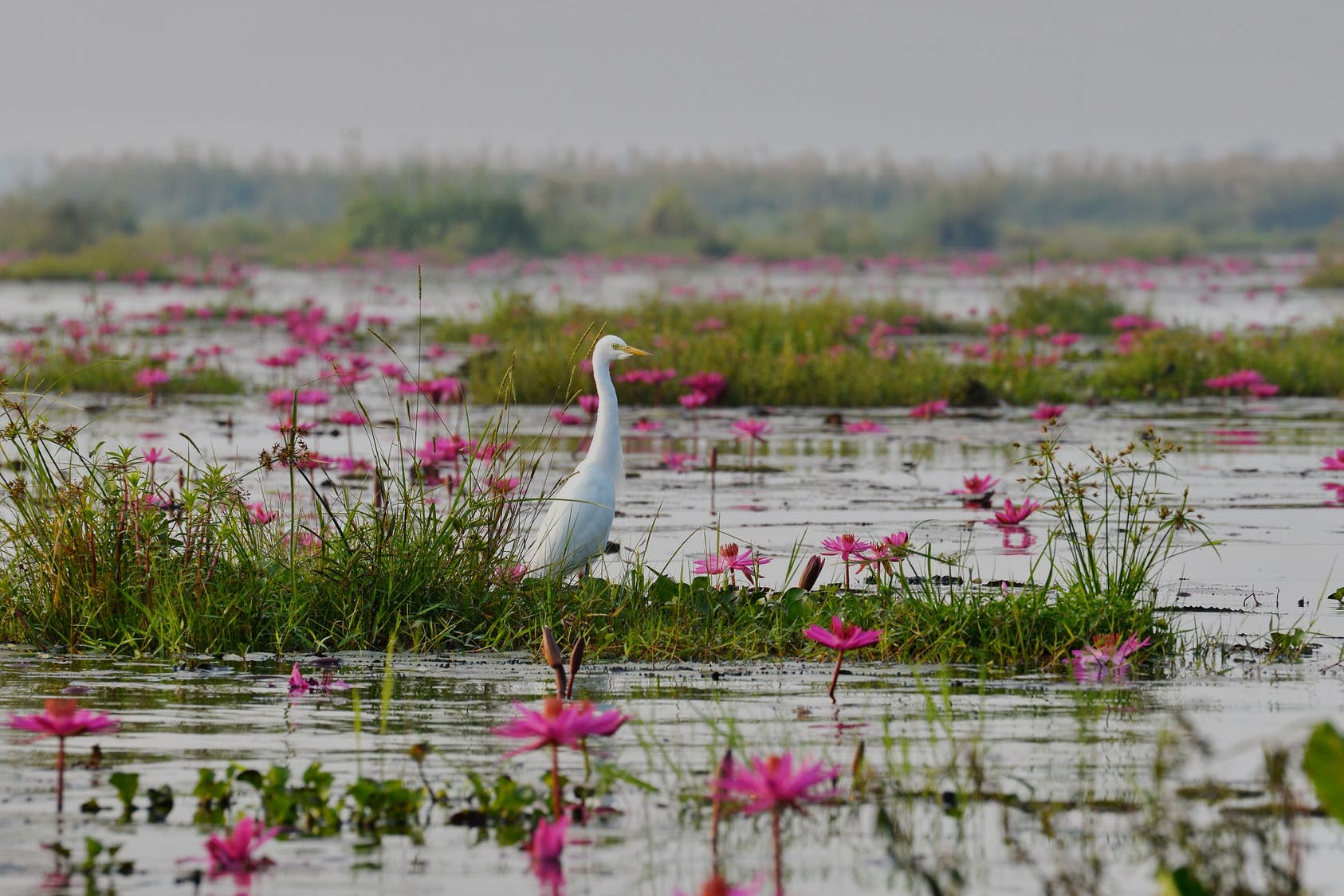 Odisha's Chilika Lake is an ecotourism hotbed
