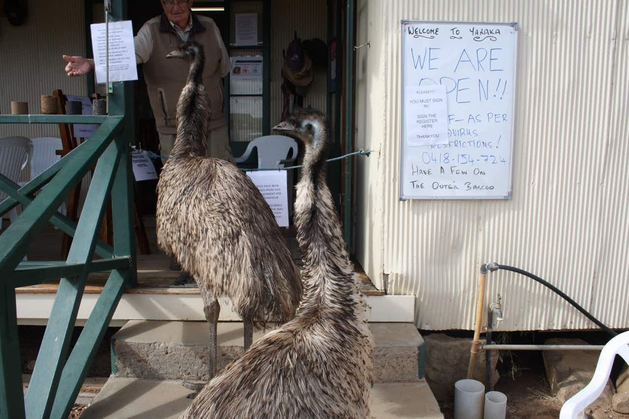 Yaraka's resident emus Kevin and Carol have learned how to go up the steps of the local hotel © Yaraka Hotel