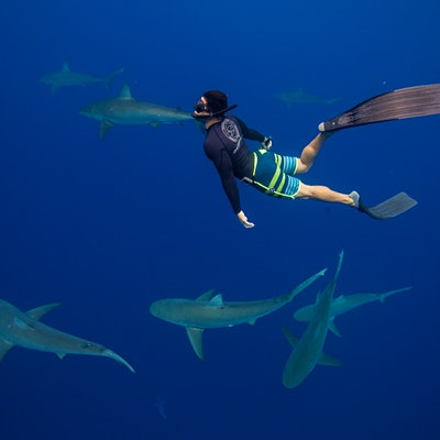 The top 7 places to dive with sharks
