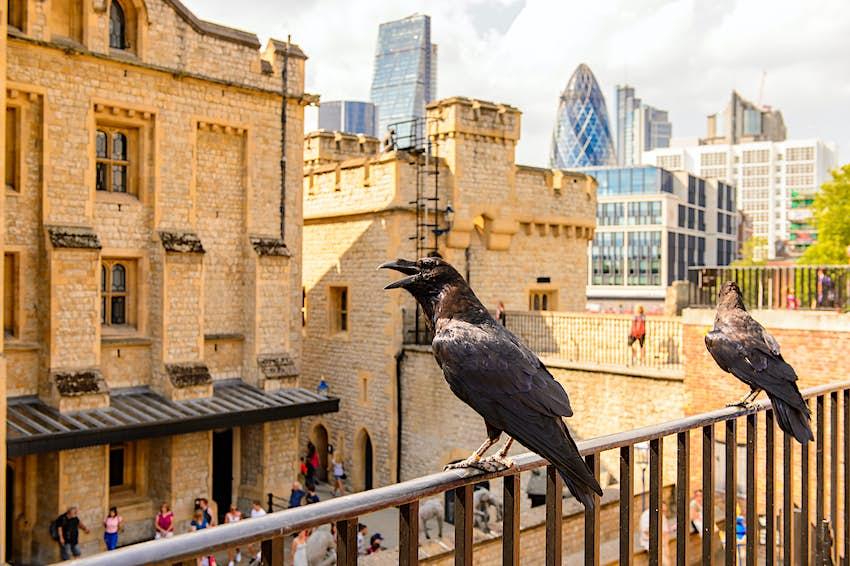Quạ đậu trên ban công ở Tháp Luân Đôn (Cung điện Hoàng gia của Nữ hoàng và Pháo đài của Tháp Luân Đôn).