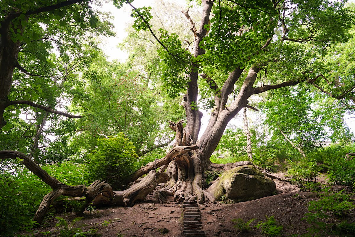 Which of these trees is the most amazing in England? - Lonely Planet