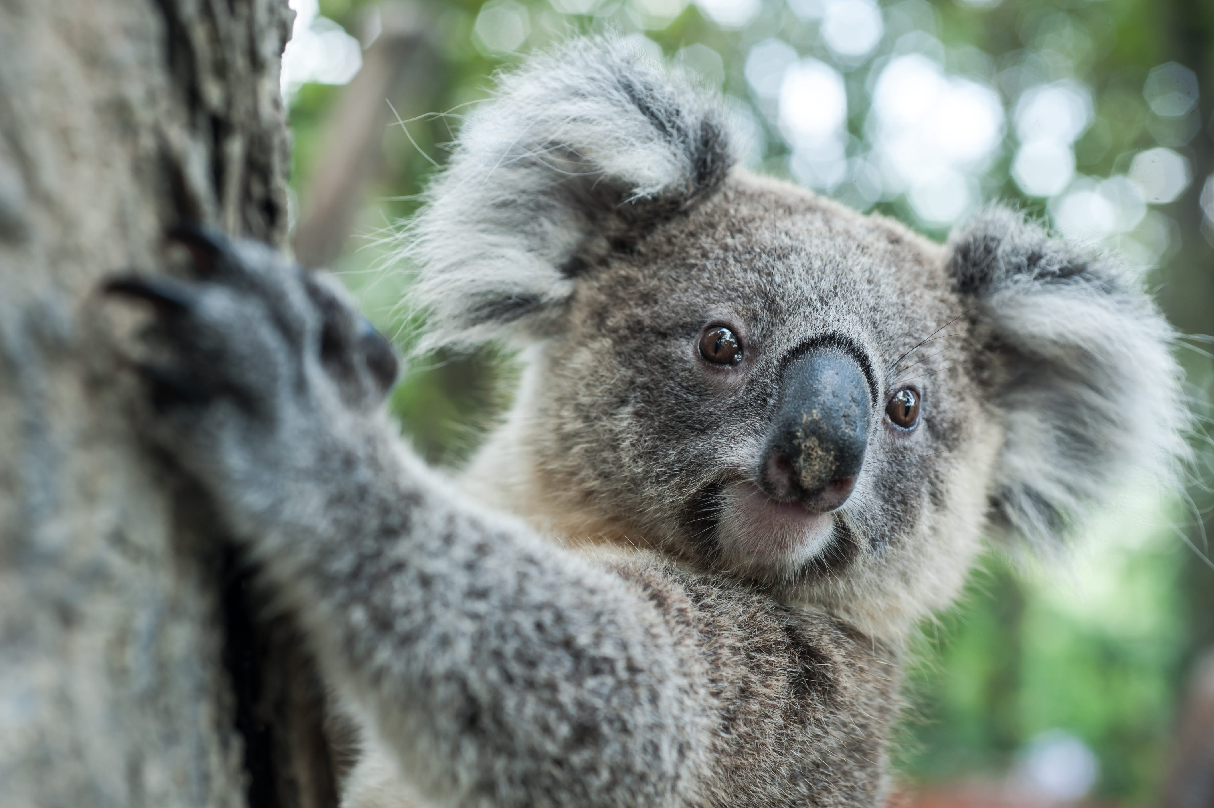 Learn more about Wildlife Biology in Australia
