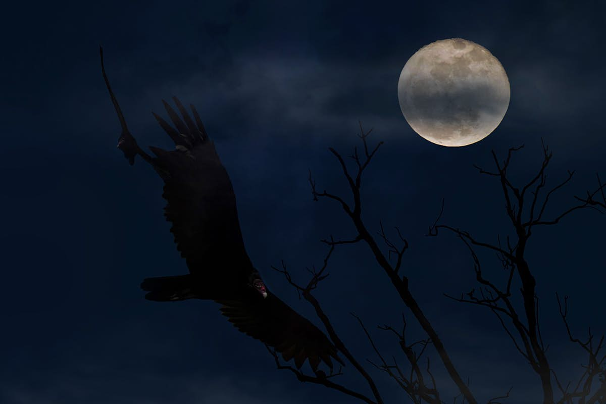 There will be a rare blue moon on Halloween this year - Lonely Planet