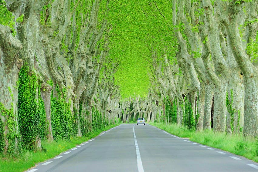 Tall green trees flank a single-lane road in the South of France