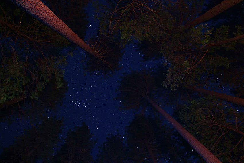 Starry skies at Redwood National Park