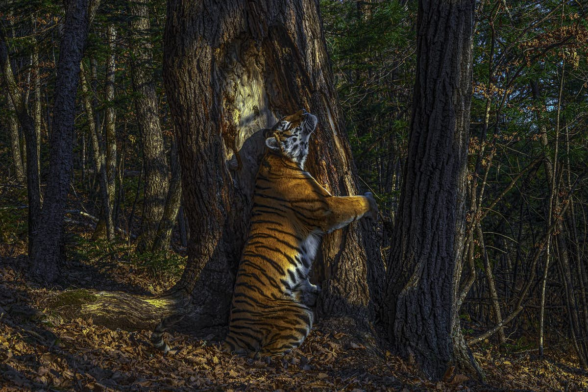 See wild beauty captured in these award-winning photos - Lonely Planet