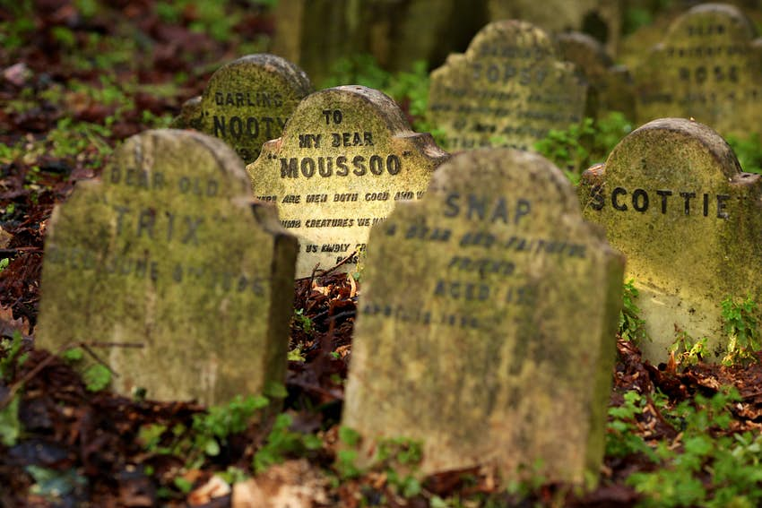 A headstone lit up by natural light reads 'To my dear Moussoo'