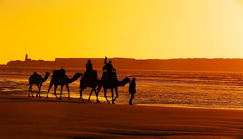 Une paire de personnes monter à dos de chameau sur la plage à Essaouria, Maroc au coucher du soleil