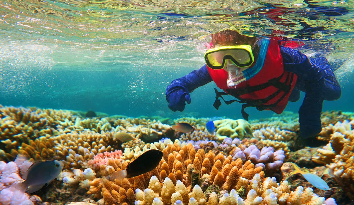 Australia's best snorkeling and diving spots