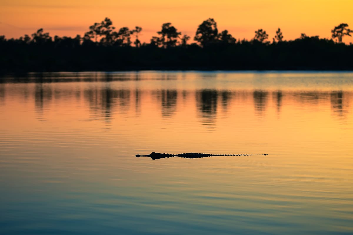 Travels In Florida - cover