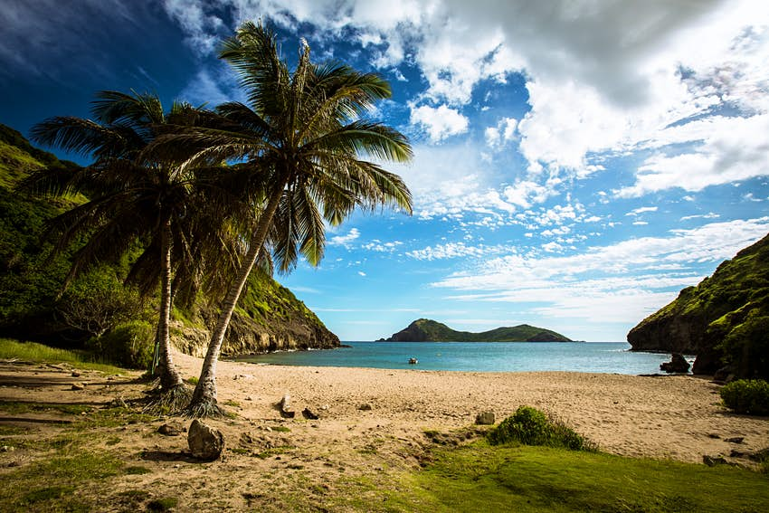 A palm tree frames the shot of a beach in Guadeloupe