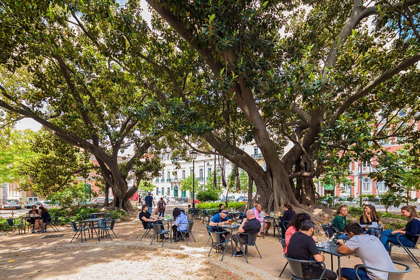 People sit at a few tables at an outside cafe underneath huge trees which form a canopy over them
