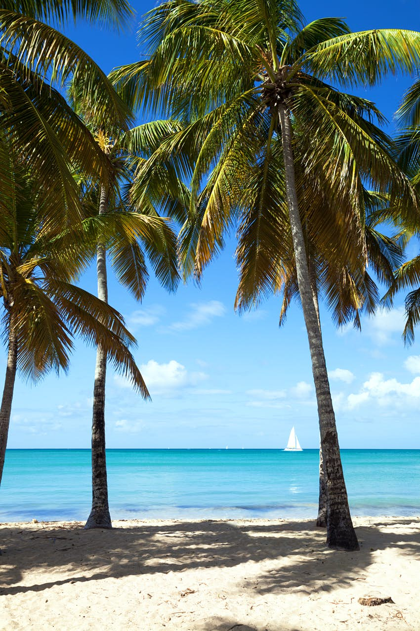 Les Salines beach with tall palm trees and sail boat in the Caribbean, Martinique, French Antilles, Caribbean