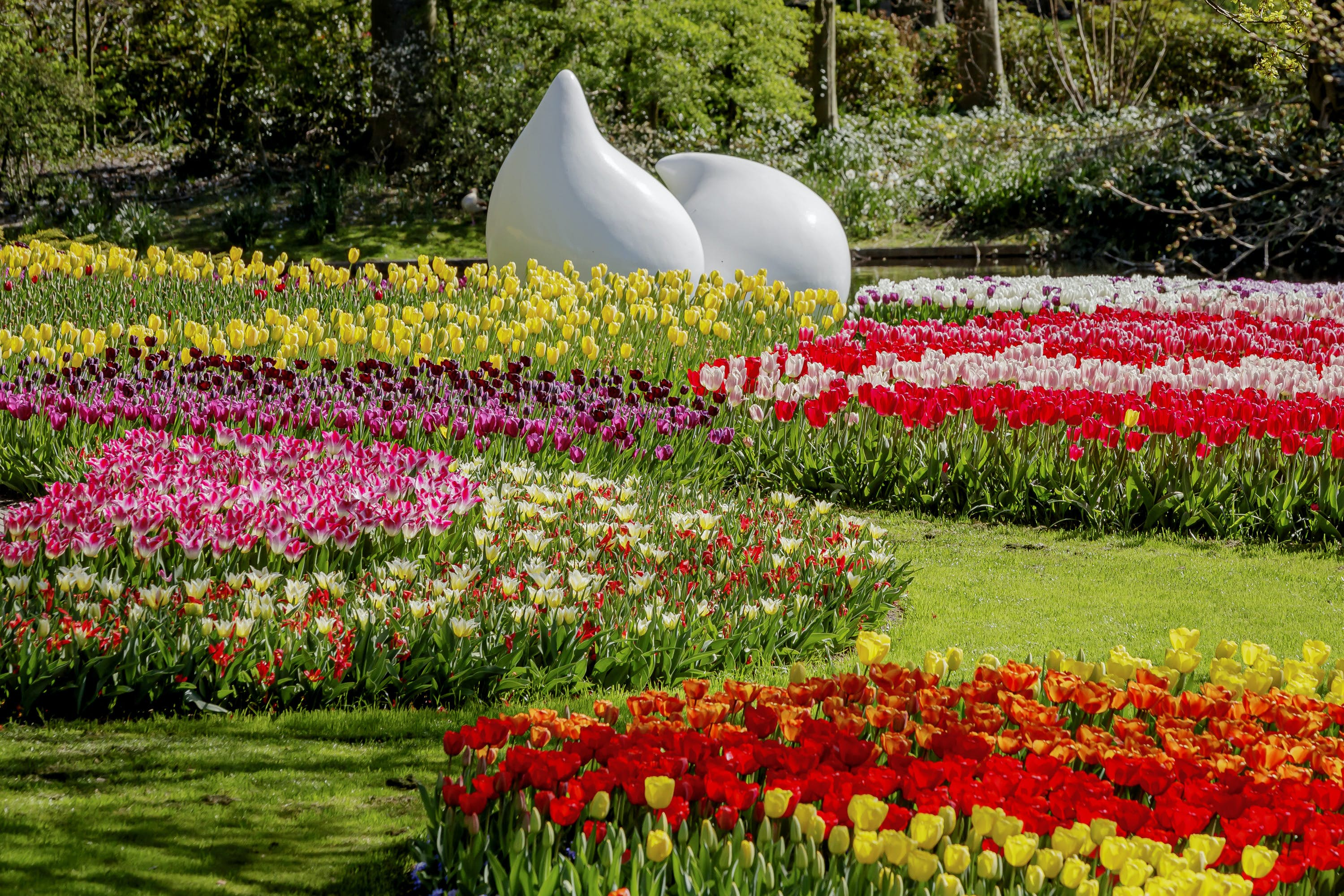 7 beautiful botanic gardens you can tour from home - Lonely Planet
