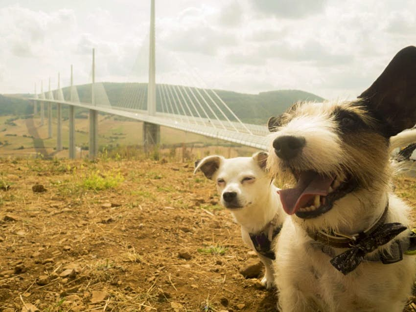 Sundae and Toby near the Millau Viaduct in southern France