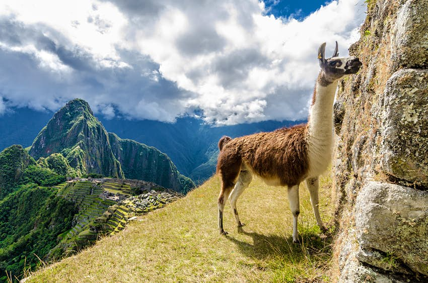 500px Photo ID: 92123455 - Enjoying Machu Pichhu with a llama.