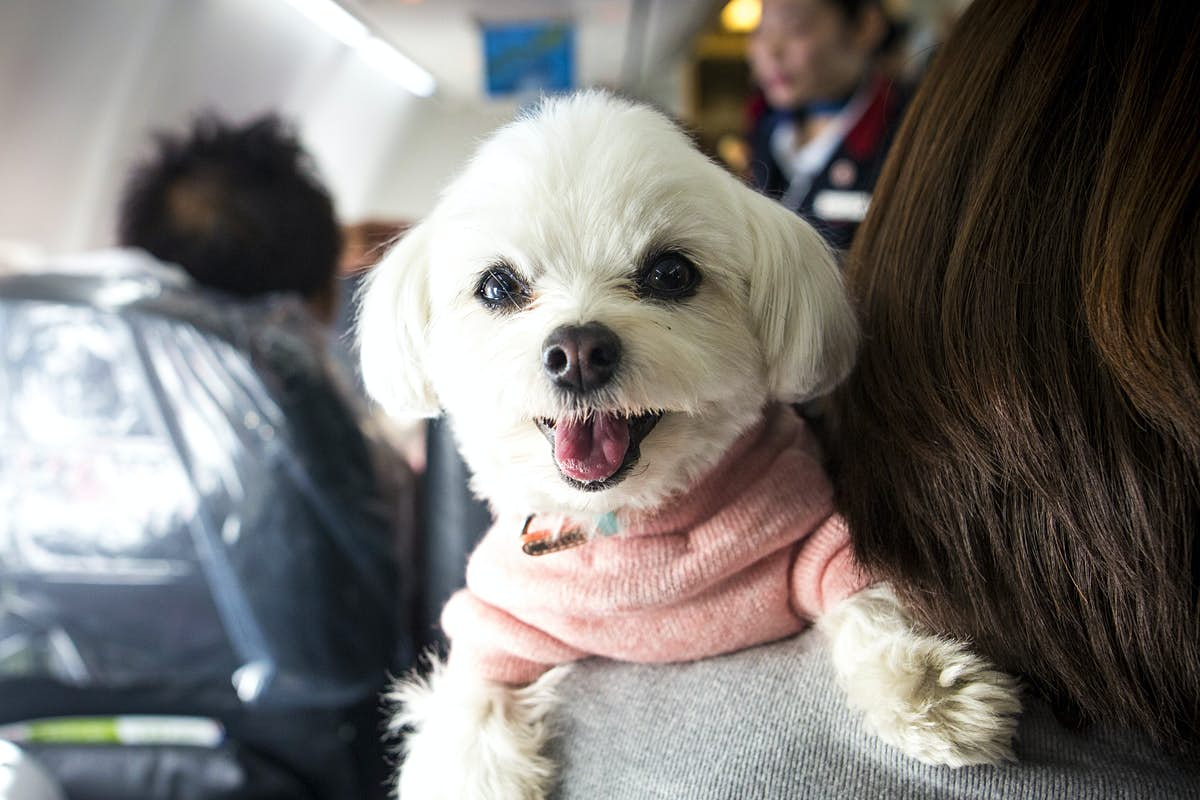 US airlines are introducing tough new rules for emotional support animals - Lonely Planet
