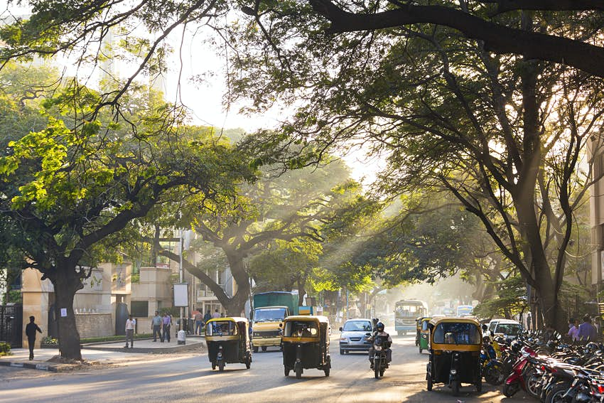 Yellow-and-black auto-rickshaws on a tree-lined street, Bangalore. Sunbeams are shining through the trees