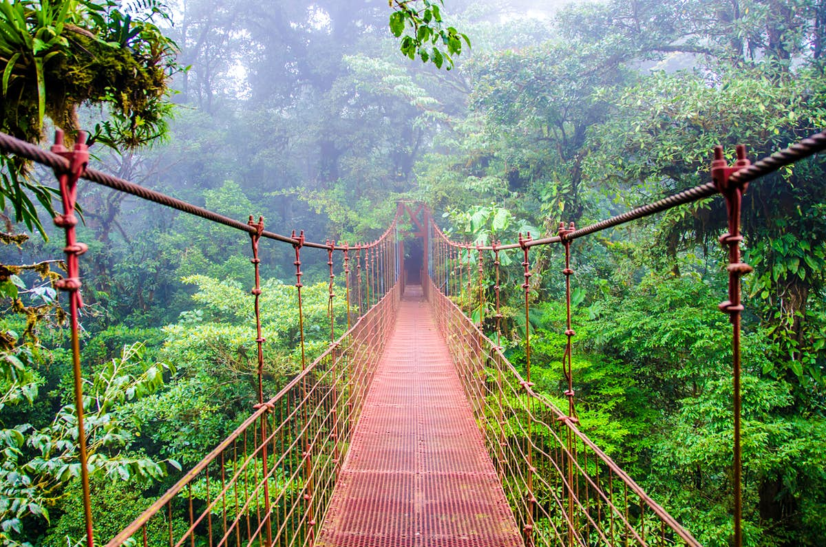 Stroll through the treetops on the world's best forest canopy walkways