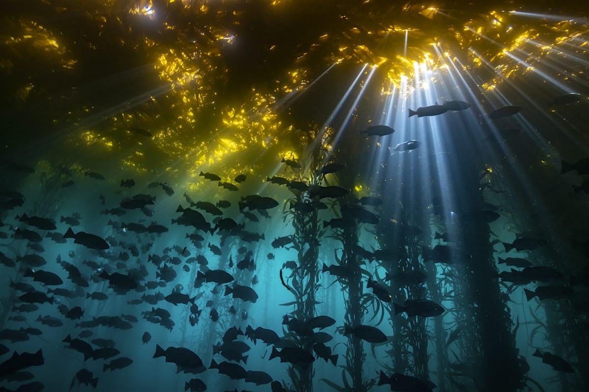 Underwater photography contest captures astonishing scenes of animal behavior - Lonely Planet