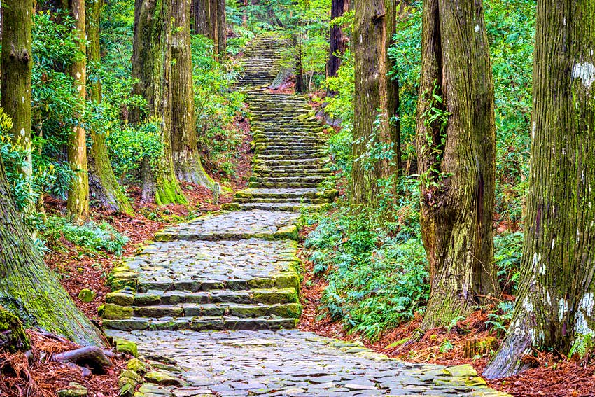 A path, made up of a series of wide stone steps, weaves through dense forest