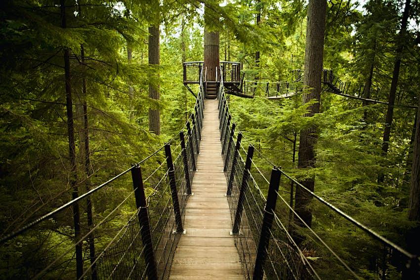 A suspension bridge hangs in a dense green forest.