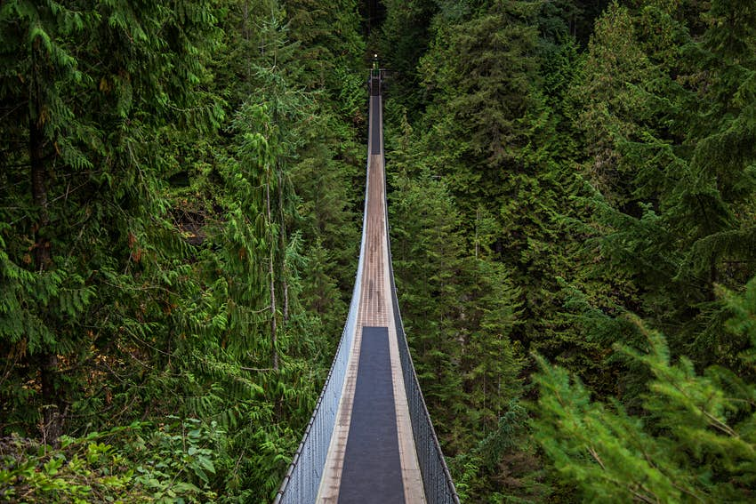 A suspension bridge through a forest canopy
