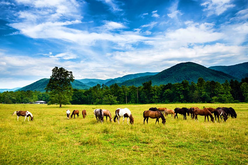 US_Scenic_Drives_CadesCove_SS.jpg