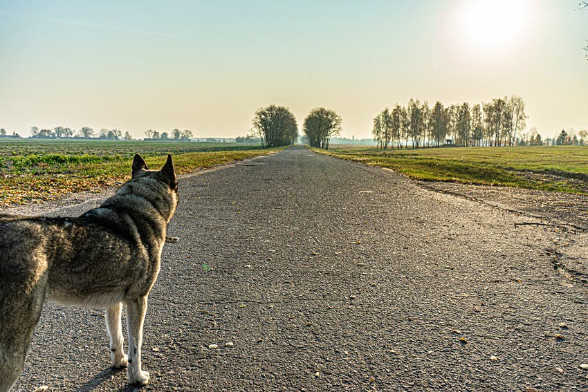 A dog stares into the empty distance in the Chernobyl Exclusion Zone.