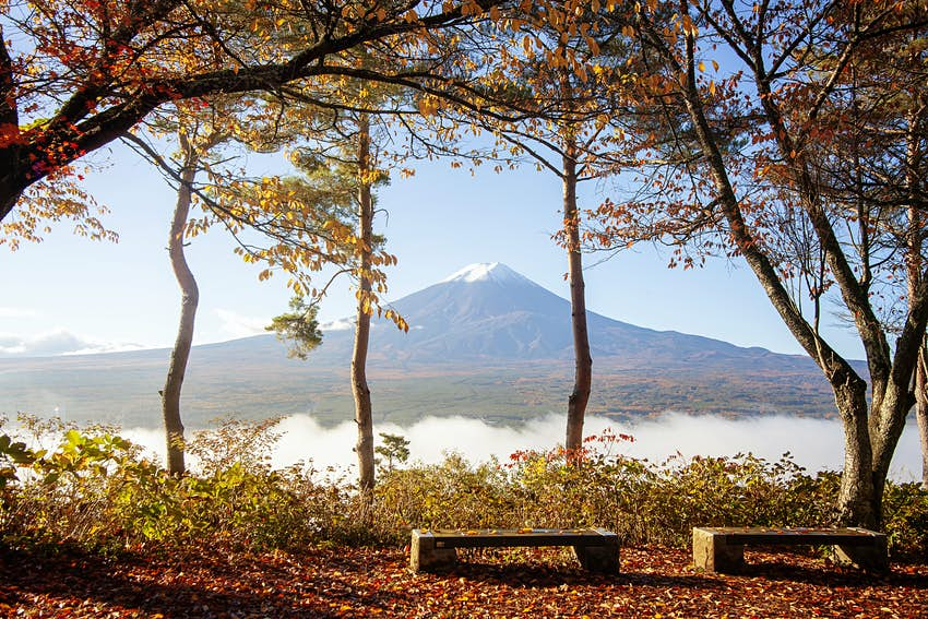 Two bench stand empty beneath trees with autumnal leaves and next to a large lake, Lake Kawaguchiko, with the giant Mt Fuji in the distance. The mountain is topped by snow.