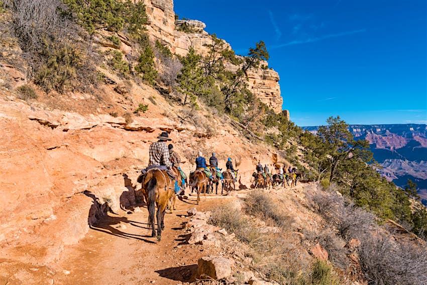 People on mule ride adventure tour in Grand Canyon Arizona USA