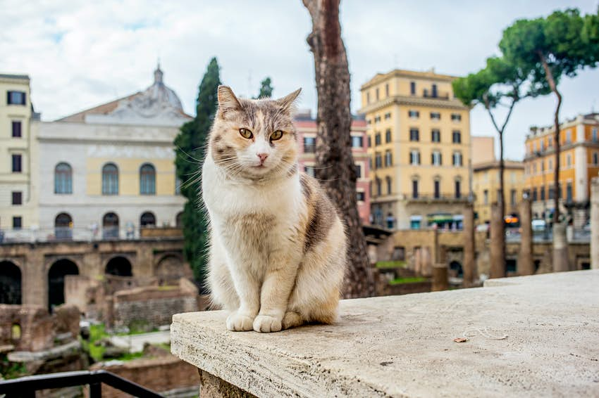 Cat in Largo Argentina