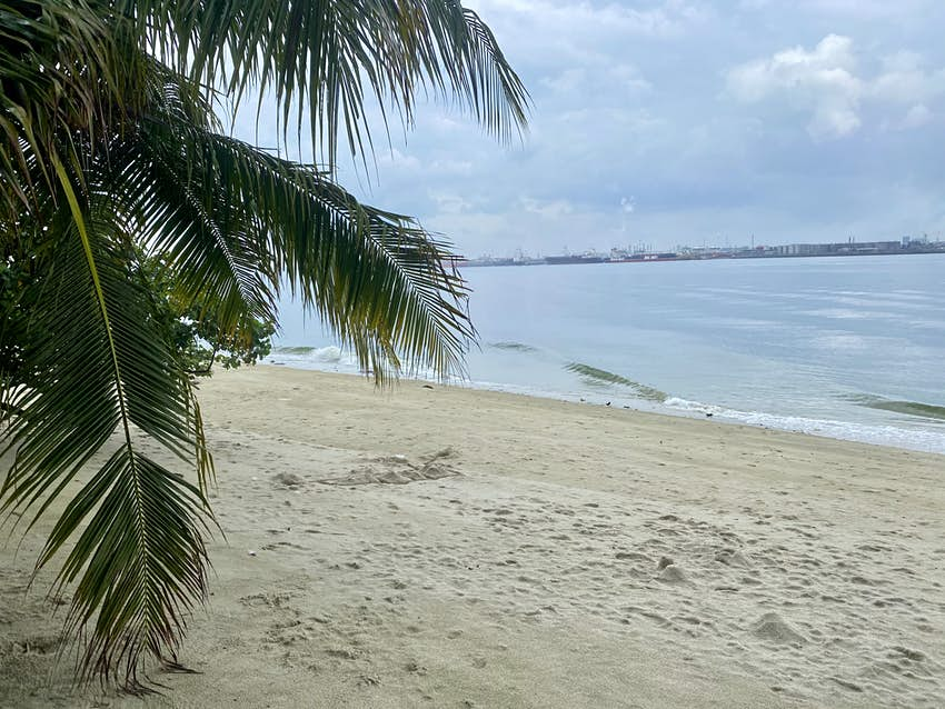 A palm tree on an empty sandy beach with the ocean in the background
