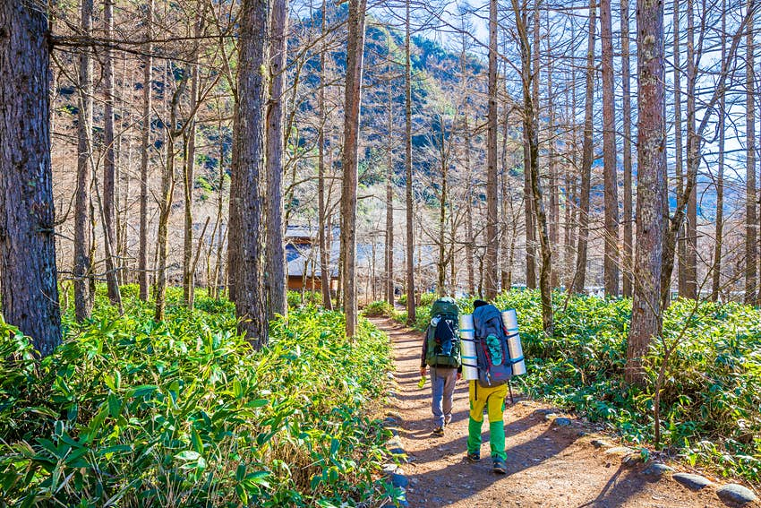 Two hikers with large backpacks walk along a trail through thick forest in Kamikochi, Japan.