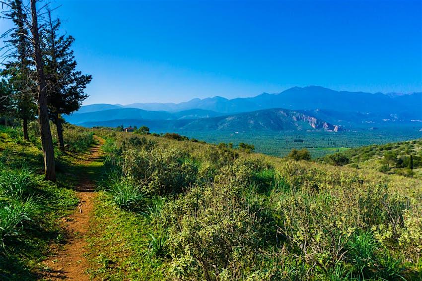 Ένα στενό μονοπάτι για πεζοπορία κατευθύνεται σε απόσταση δίπλα σε ένα δάσος αλόγων στο Εθνικό Πάρκο Παρνασσού.  Το μονοπάτι περιβάλλεται από πλούσια βλάστηση, και πολλά βουνά είναι ορατά στο βάθος.