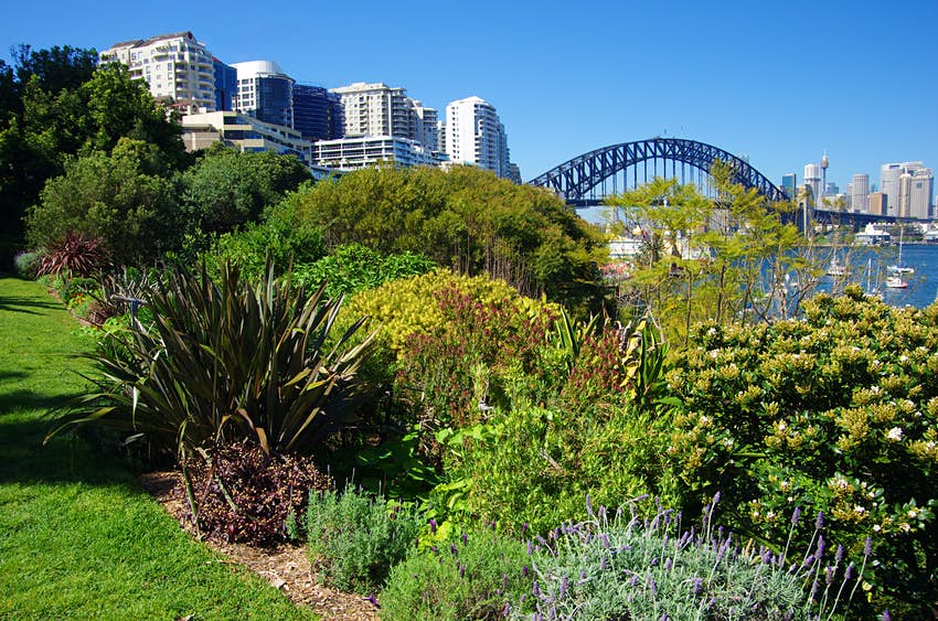 View to the Sydney Harbour Bridge from the top of Wendy Whiteley's Secret Garden