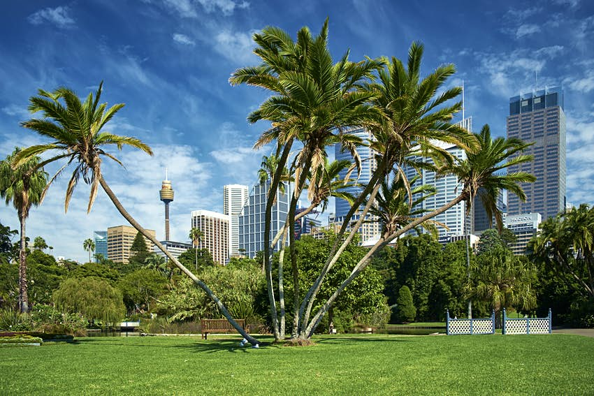 Palm trees in front of skyscrapers at Royal Botanic Garden in Sydney