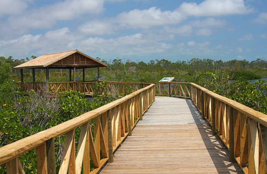 Wooden boardwalk through a mangrove swamp at Lucayan National Park in The Grand Bahama