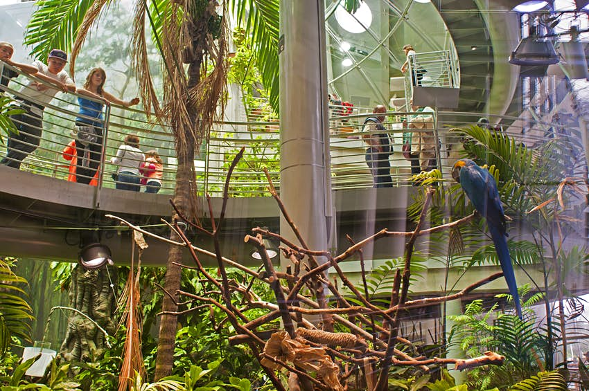 Kids looking at Macaw in the Rainforests of the World dome at California Academy of Sciences