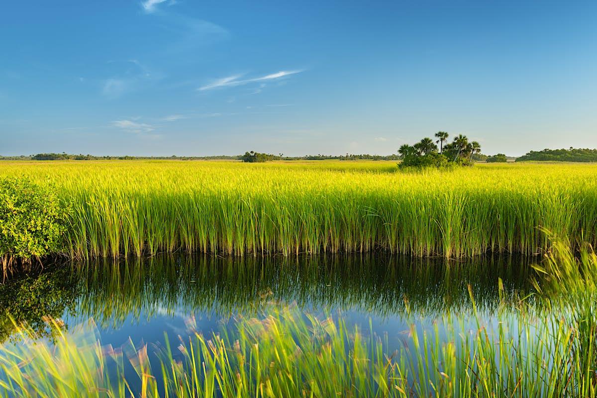 Introducing Florida's national parks