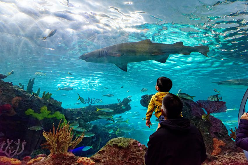 A man holds his son up to see the sand tiger shark inside Ripley's Aquarium of Canada
