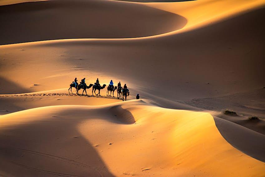 A caravan of camels walking through the golden sand dunes of Erg Chebbi in Morocco