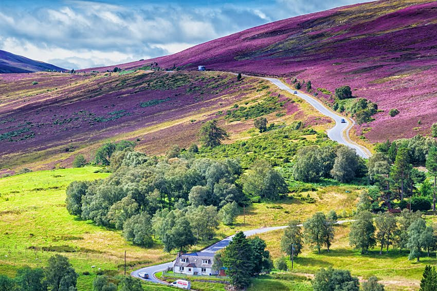 A road weaves through a hilly landscape with a purple hue from blooming lavender