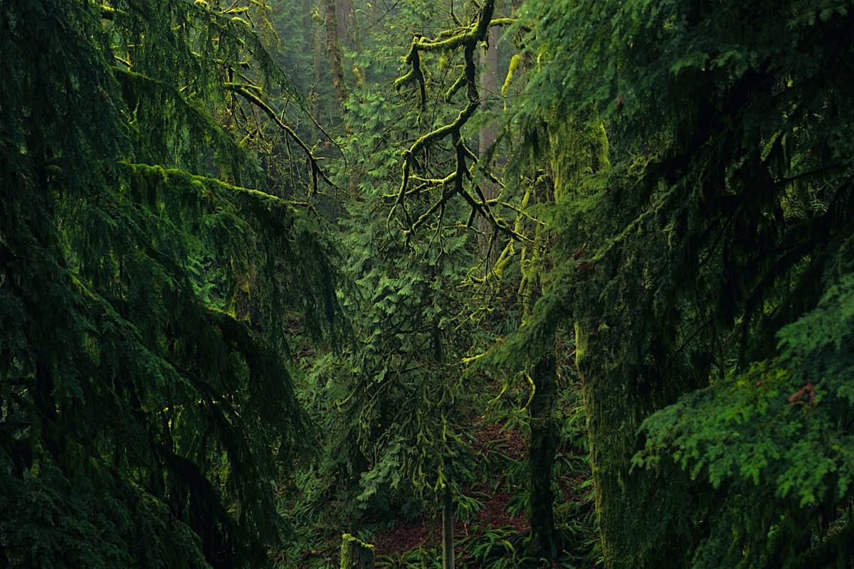 Top 10 parks in Portland, Oregon